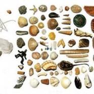Taller de conchas